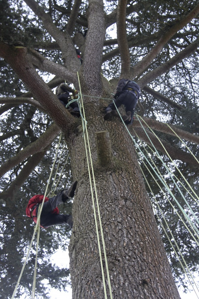 Fun Training in a really big tree!!