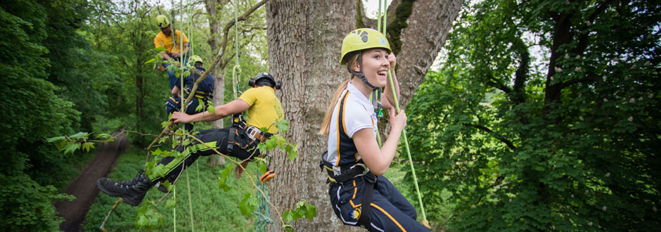 reaching-new-heights-tree-climbing