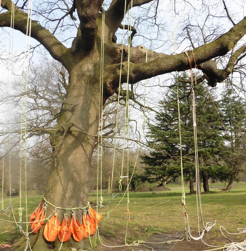 rigged tree 2