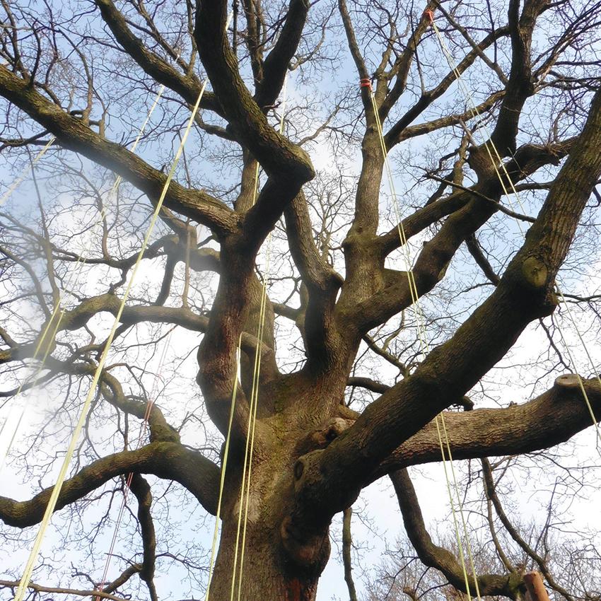 rigged tree 4